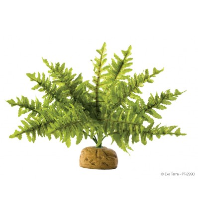 Hagen Exo Terra Boston Fern