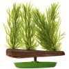 Hagen Planta Acvariu Willow Moss PT312